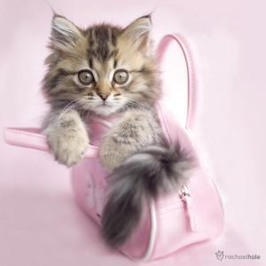 Beaux petits chatons - Image de petit chat ...